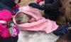 В Сестрорецке удалось спасти еще одного детеныша балтийской нерпы