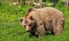 Медведи-людоеды из Якутии чуть не съели роженицу вместе с ребенком