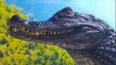 В Петербурге продают крокодила по имени Матильда за 650 ...
