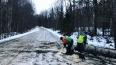 В Ленобласти ветер повалил на дороги 120 деревьев
