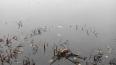 Банда браконьеров нагло ловила миногу в Неве посреди ...