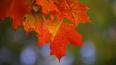 Середина октября стала самой тёплой за всю историю ...