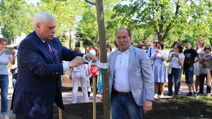 В Пулковском парке высадили аллею из 315 лип в честь дня рождения города