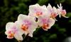 В Ботсаду проведут большую вставку орхидей перед Новым годом