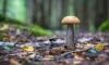 Роспотребнадзор поделился с россиянами советами по сбору грибов