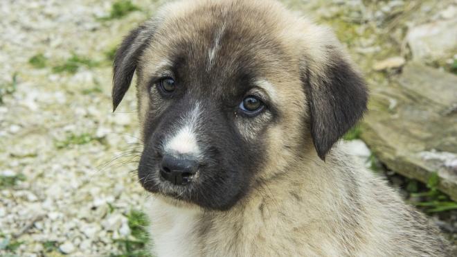 В Петербурге разработали декларацию по гуманному обращению с животными