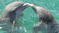 Громкое спаривание рыб приводит к глухоте дельфинов ...