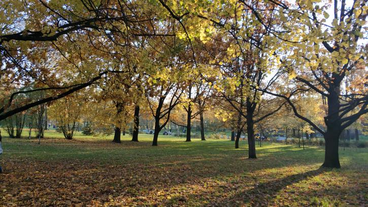 Агротехнический период в Петербурге продлен до 2 ноября
