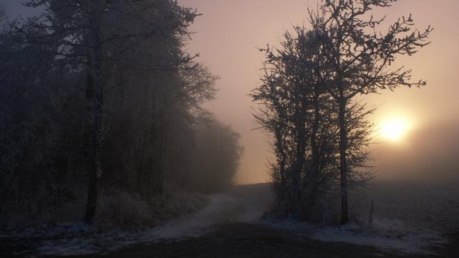 В ближайшие три дня в Ленобласти ожидается снег, туман и гололед