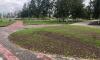 Неизвестные похитили 220 кустов кизильника из Ладожского парка