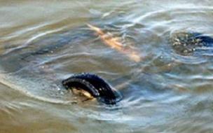 Трое подростков погибли под Тюменью, упав в реку в автомобиле