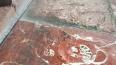 В Царском Селе нашли аммонитовую плиту возрастом 200 млн...
