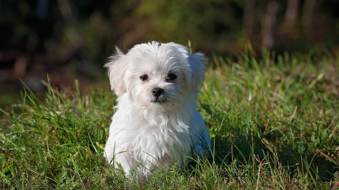 Петербургу предложили площадки для выгула собак