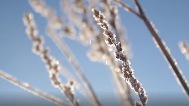 Снег и прохладную погоду обещают синоптики петербуржцам
