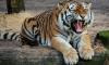 В британском зоопарке тигр растерзал смотрительницу зоопарка