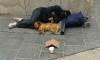 Госдума планирует ввести наказание для попрошаек с животными
