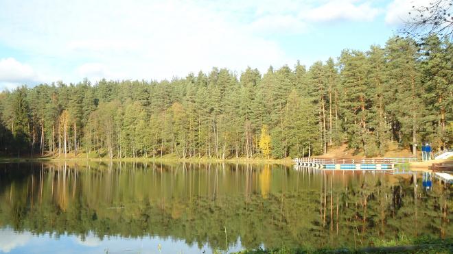 УФАС: конкурс на создание экопарка в Петербурге следует провести заново