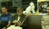 ТОП-МЕТРО, животные в петербургской подземке: от мимимишечек до полного трэша
