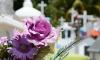 На Северном кладбище в поселке Парголово захоронят останки летчика, погибшего в 1942 году