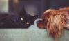 Россельхознадзор не пустил в Петербург 19 тонн корма для кошек и собак