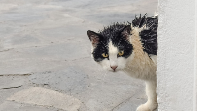 Выходные в Петербурге будут с дождем и сильным ветром