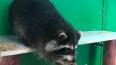 Прокуратура закрыла контактный зоопарк на Фонтанке