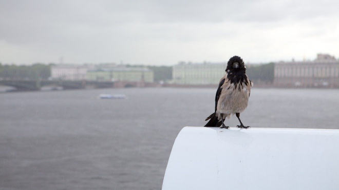Петербург установил пятый температурный рекорд за февраль