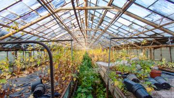 Смольный предоставит инвестору судьбу оранжереи в Таврическом саду по концессии