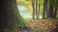 """В Александровском саду деревья лечат от """"голландской ..."""