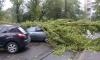 В Петербурге шторм обрушил деревья на автомобили