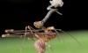 На Мадагаскаре нашли восемнадцать видов пауков