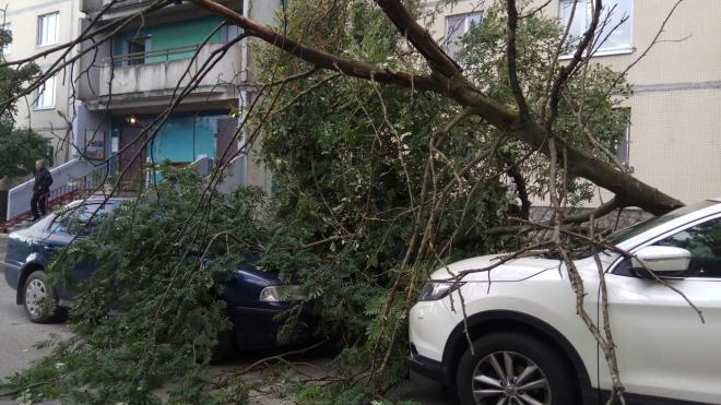 Ночью сильный ветер повалил несколько деревьев на машины петербуржцев
