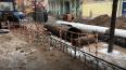 """""""Газпром энергохолдинг"""" снова обсудит со Смольным ..."""