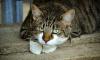 В Адмиралтейском районе женщина выкинула из окна семь кошек