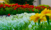 Выборг продолжают украшать цветами