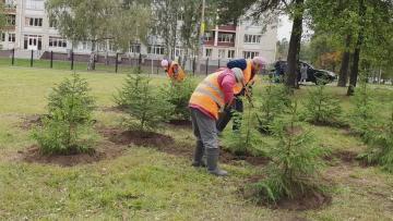 В весенний период в Петербурге высадят 6 тыс. деревьев и вымоют 5 тыс. фасадов зданий