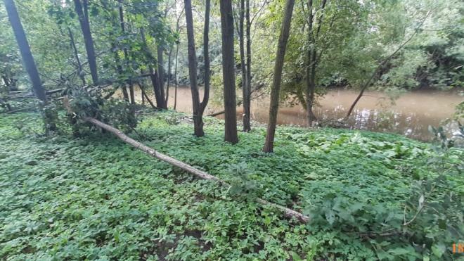 Сады и скверы Петербурга снова закрывают из-за шторма