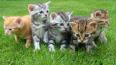 В Петербурге пятеро котят с именами известных футболистов ...