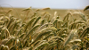 Экспорт российской сельхоз продукции достигнет $30 ...
