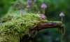 В Петербурге усилят защиту краснокнижных видов грибов от браконьеров