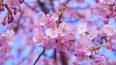В Японии 70-летнюю женщину приговорили к повешению ...