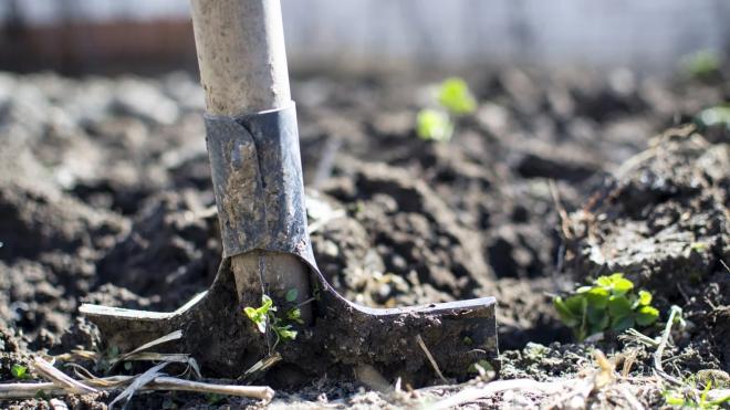 Контрольно-счетная палата проверит расходование бюджета Управлением по развитию садоводства и огородничества