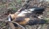 В Австралии убийцу 406 клиновидных орлов осудили на 14 суток