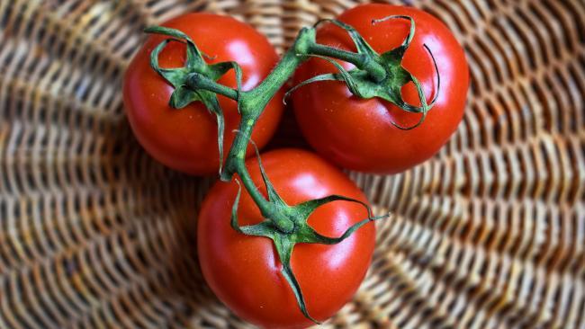 Минсельхоз РФ намерен увеличить квоту на ввоз помидоров из Турции