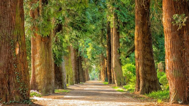 В 2020 году деревьев в Петербурге станет на 15% больше