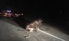 В Ленинградской области автомобилист сбил дикого лося