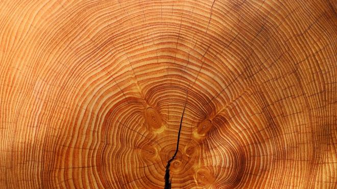 В Ленобласти преступники украли древесины на 40 миллионов рублей