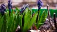 ВБотаническом саду намерены перерабатывать пищевые ...