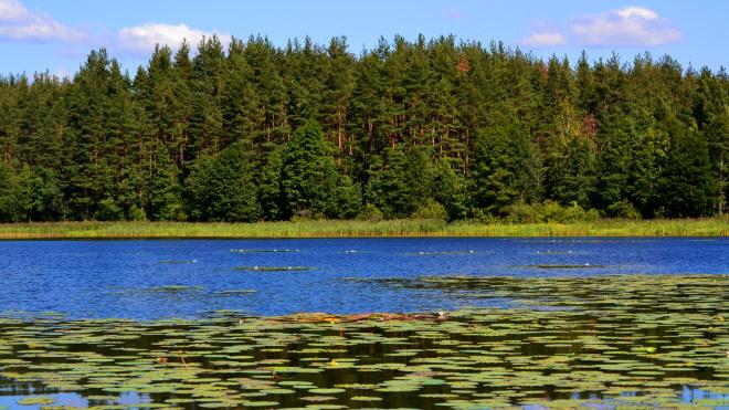 В Ленобласти высадили 20 гектаров леса