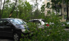 В Петербурге на автомобиль упало дерево